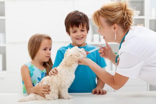 Vaccinations Weyburn
